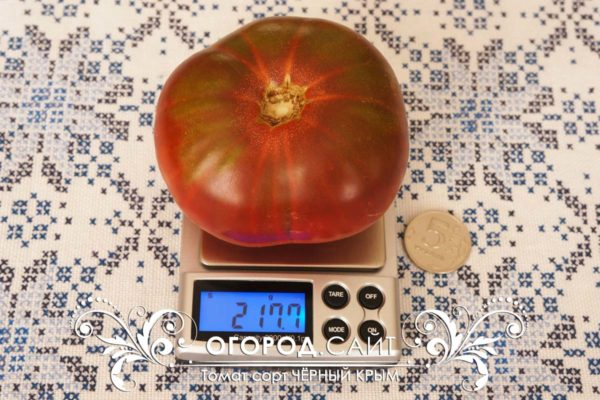 Купить семена сладких помидоров Чёрный Крым