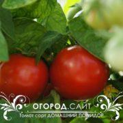 Томат сорт Домашний помидор семена