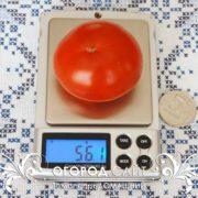 pomidor-domashny-5