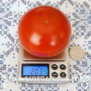 pomidor-ekstremal-1