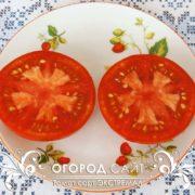 pomidor-ekstremal-2