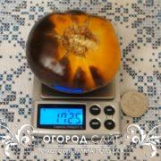 Купить семена экзотических томатов Голубая Элма