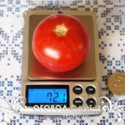 pomidor-kemerovets-2