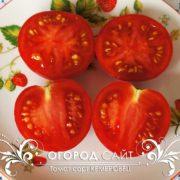 pomidor-kemerovets-3
