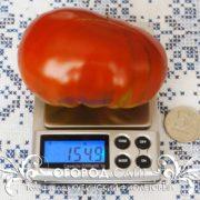 pomidor-kubinskiy-fioletovy-1