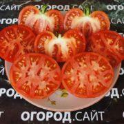 томаты монгольский карлик семена