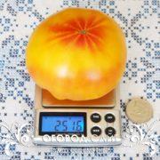 томат мятные характеристика описание сорта