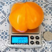 pomidor-oranzhevoe-serdtse-1