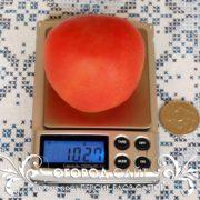 pomidor-persik-blov-satton-1