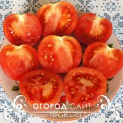 pomidor-persik-blov-satton-2