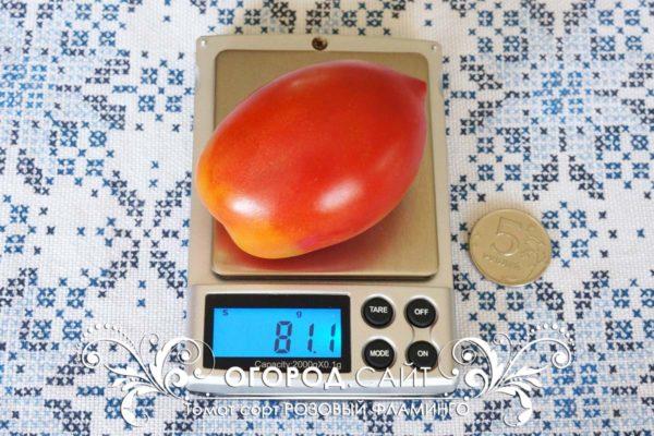 pomidor-rozovy-flamingo-2