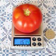 pomidor-rozovy-krasivy-3