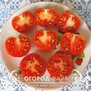 pomidor-tayana-3