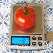 pomidor-tayana-4