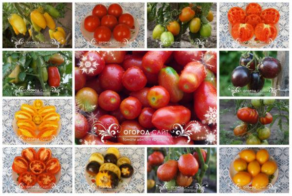 Коллекция долгохранящихся томатов