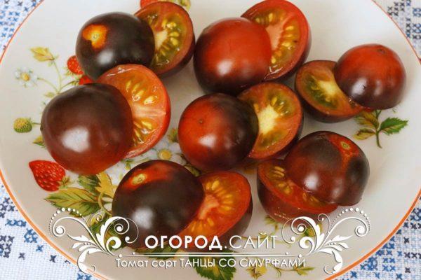 Синий томат сорт Танцы со смурфами