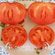 pomidor-burkovskiy-ranniy-2