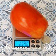 pomidor-gigantskie-italyanskie-pasty-3