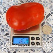 pomidor-gigantskie-italyanskie-pasty-4