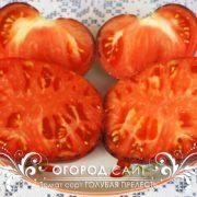 pomidor-golubaya-prelest-3