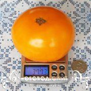 томат хурма фото
