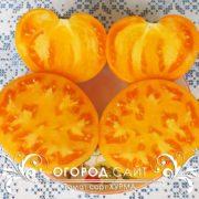 сорт томатов хурма фото
