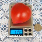 томат клубничное дерево купить семена почтой
