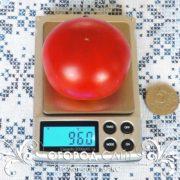 pomidor-maks-1