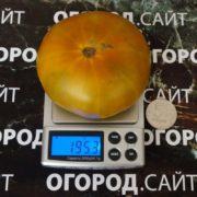 малахитовая шкатулка томат купить