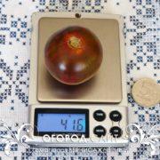pomidor-vernisazh-cherny-3