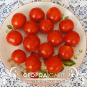 pomidor-vinogradny-gigant-3
