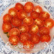 pomidor-vinogradny-gigant-5