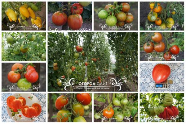 купить семена томатов у частных коллекционеров