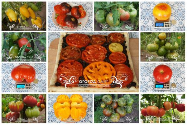 купить семена сладких томатов у коллекционеров