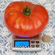 pomidor-brandywine-sudduth-strain-6