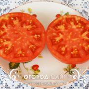 pomidor-samye-luchshie-2