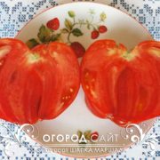 pomidor-shapka-marshala-1