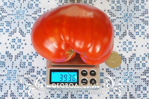 pomidor-shapka-marshala-2