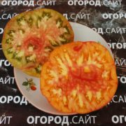 томат золотой ананас, помидор чёрный ананас