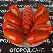 томат сорт безумие касади