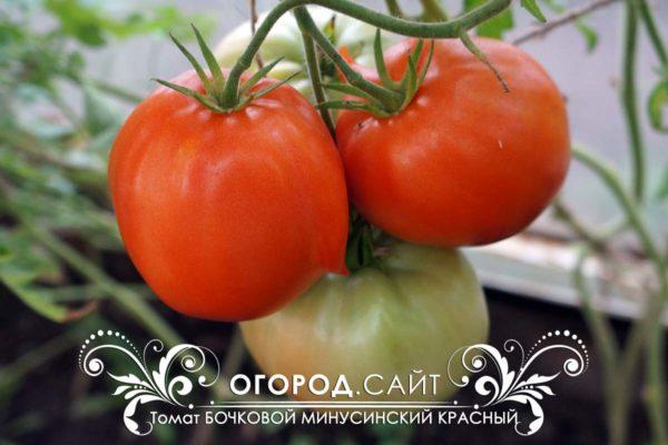 томат бочковой минусинский красный для теплицы