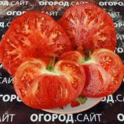 томат минусинский бурлак фото