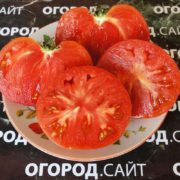 бычий лоб минусинский томат характеристика