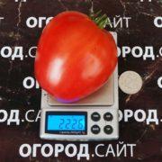 томат бычье сердце минусинское фото