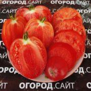 томат минусинские сердца