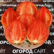 помидор бычье сердце выставочное минусинское