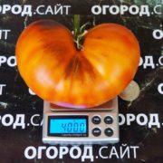 крупные томаты мечта алисы