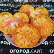 томат мечта алисы фото