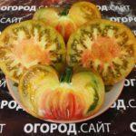 помидор медная река семена купить