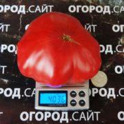 Томат Минусинский безразмерный